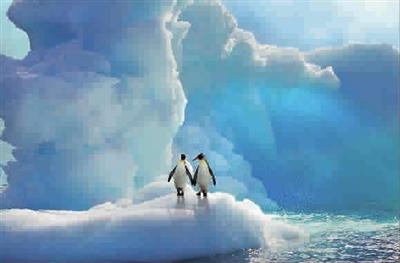 南极的企鹅小哥俩